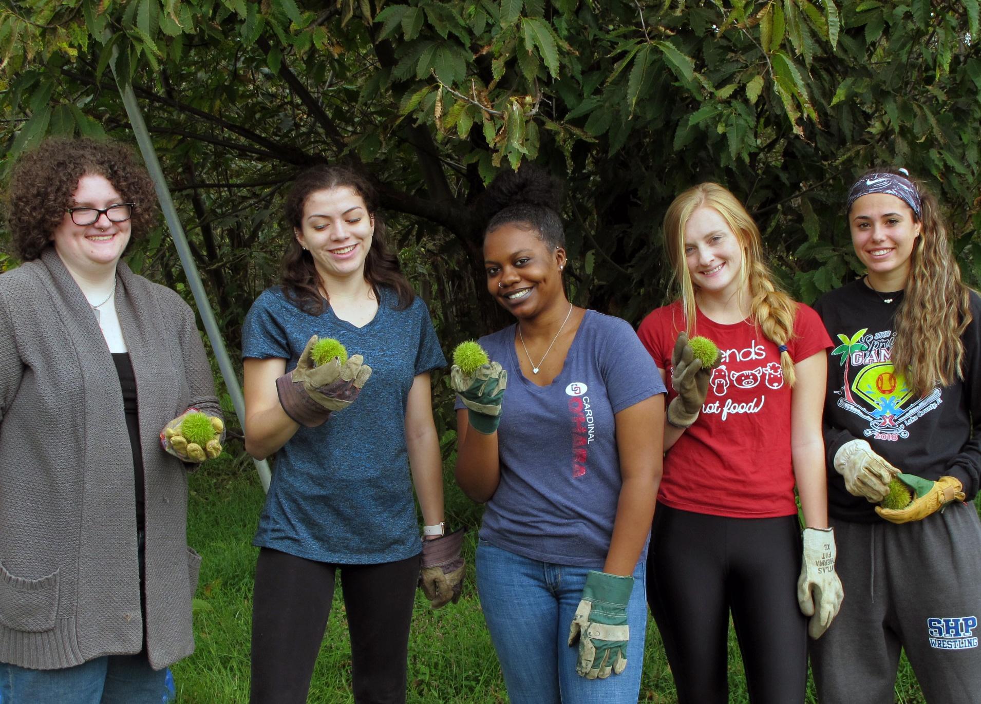 Saving the American Chestnut Tree